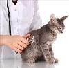Ветеринарные клиники в Абазе